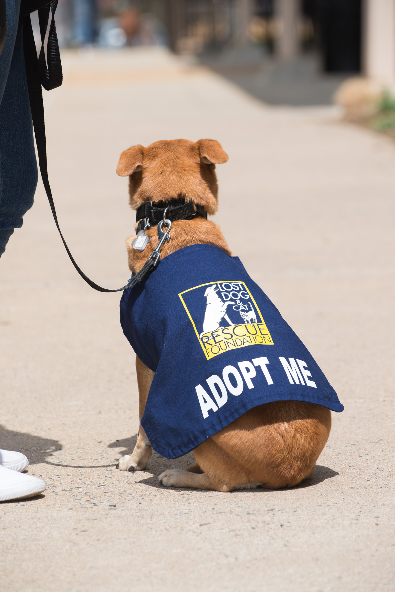 Dog with Adopt Me Vest from Lost Dog and Cat Rescue Foundation